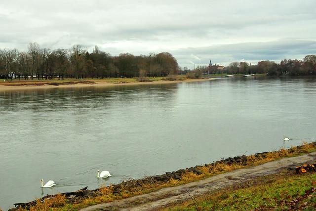 Dezember 2020 ... Der Rhein bei Mannheim-Lindenhof ... Foto: Brigitte Stolle