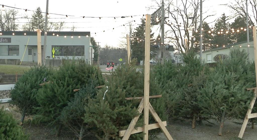 Christmas Tree Disposal Begins in Meridian Township
