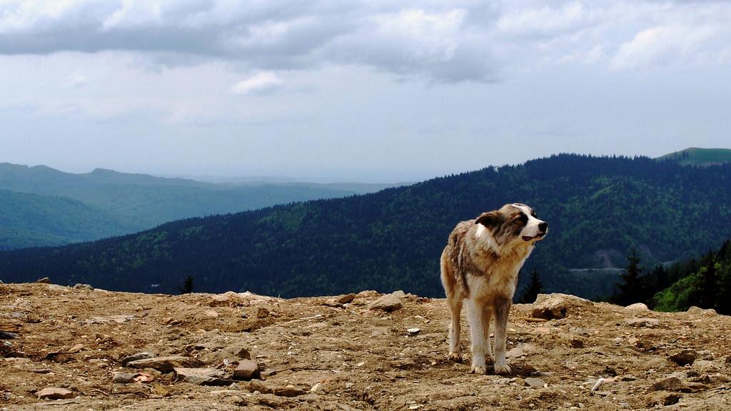 Romania Sinaia vuorella