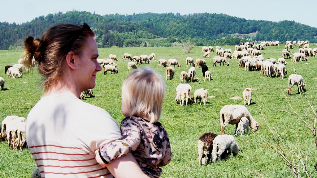 Romania eläimet 2