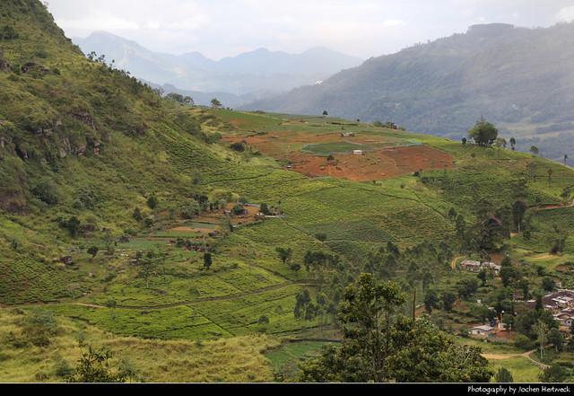Hill Country, Ramboda, Sri Lanka