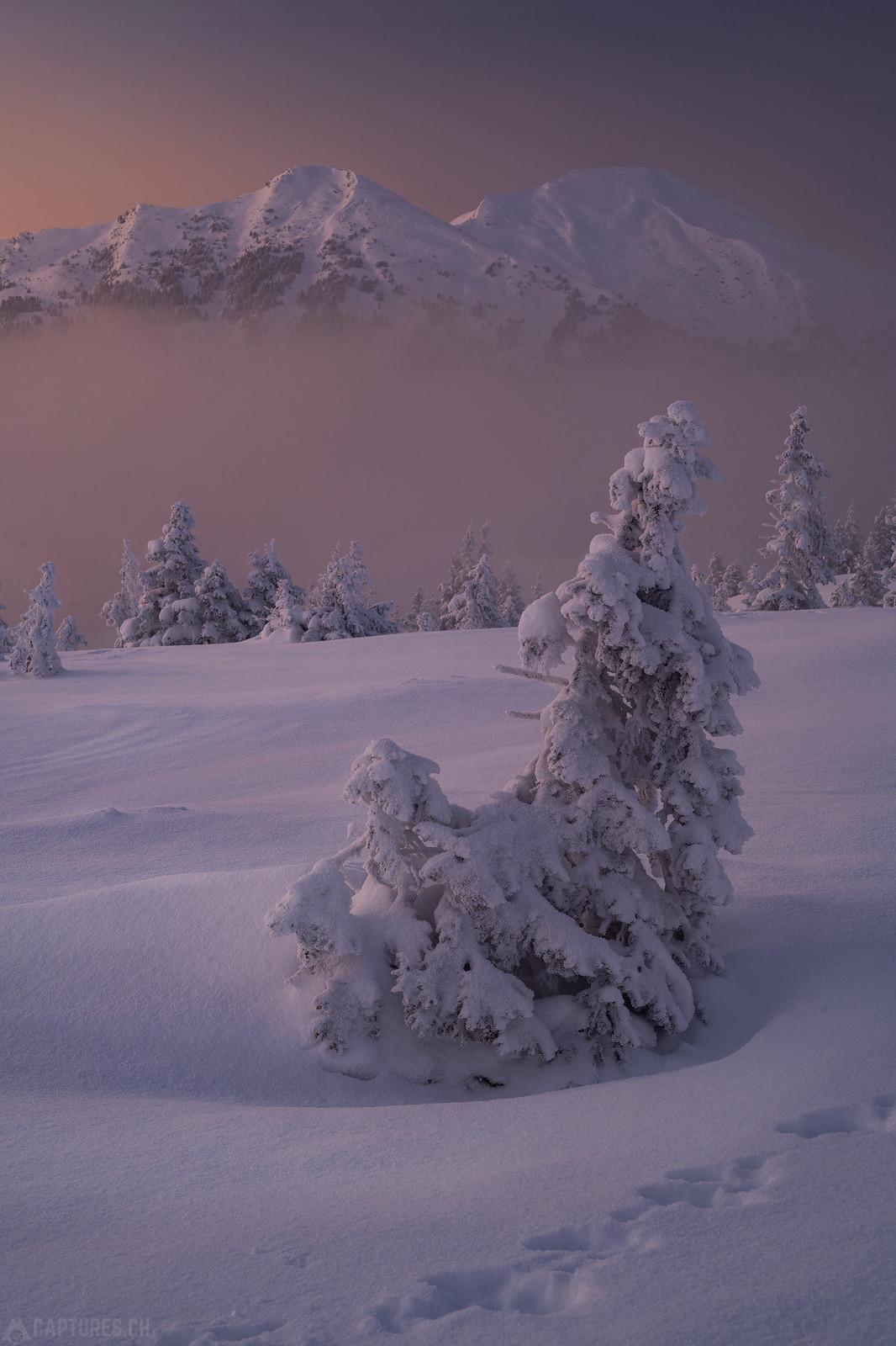 Foggy Landscape - Zentralschweiz