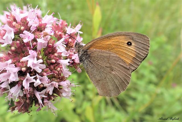 Butterfly 2033