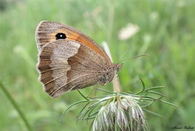 Butterfly 2034