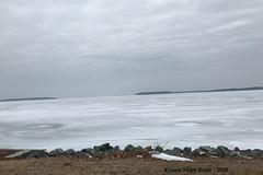 Frozen Miles River 2018