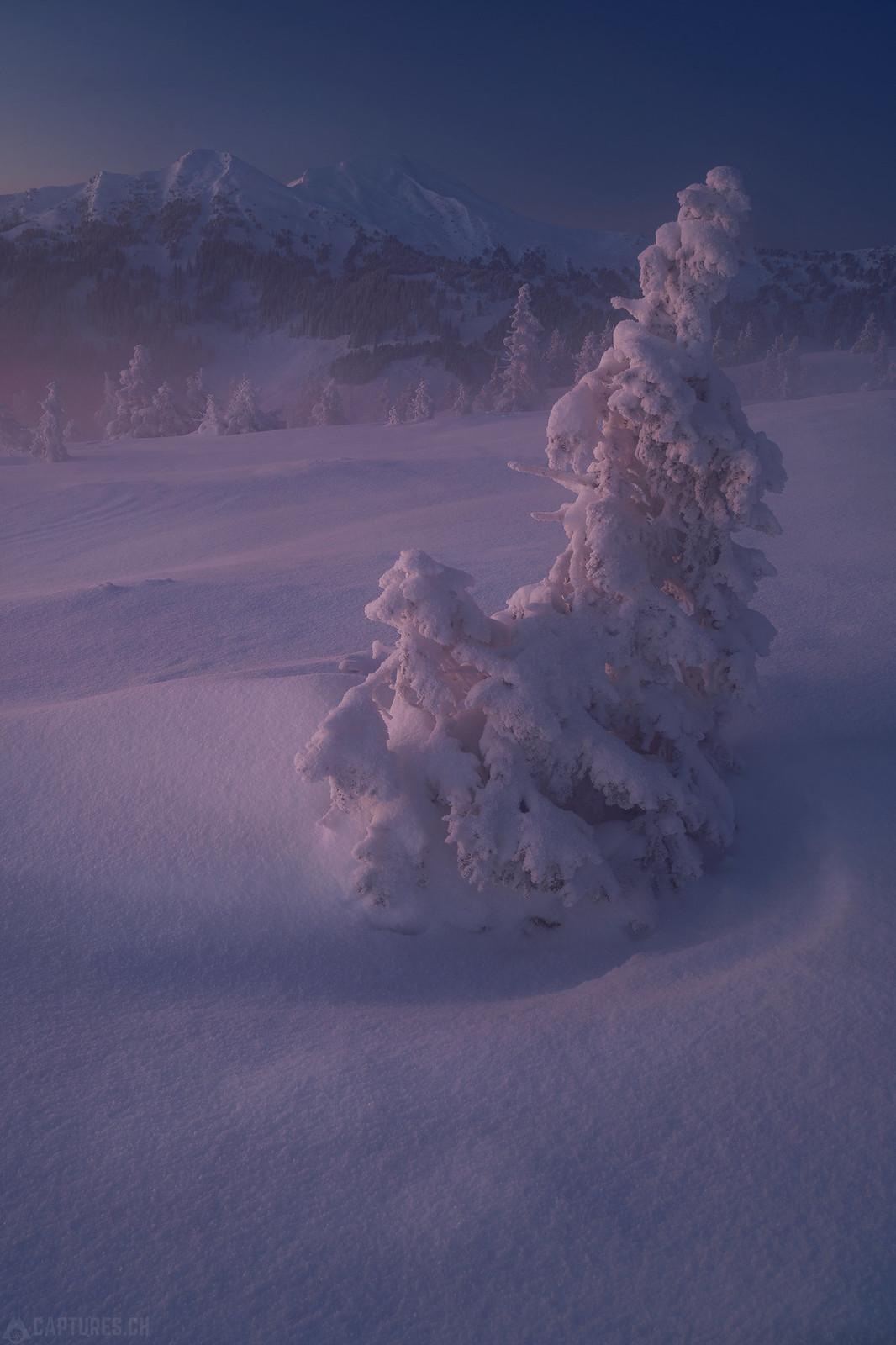 Ghost trees - Zentralschweiz