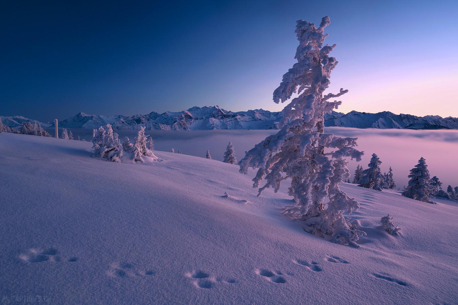 Fog after sunset - Zentralschweiz