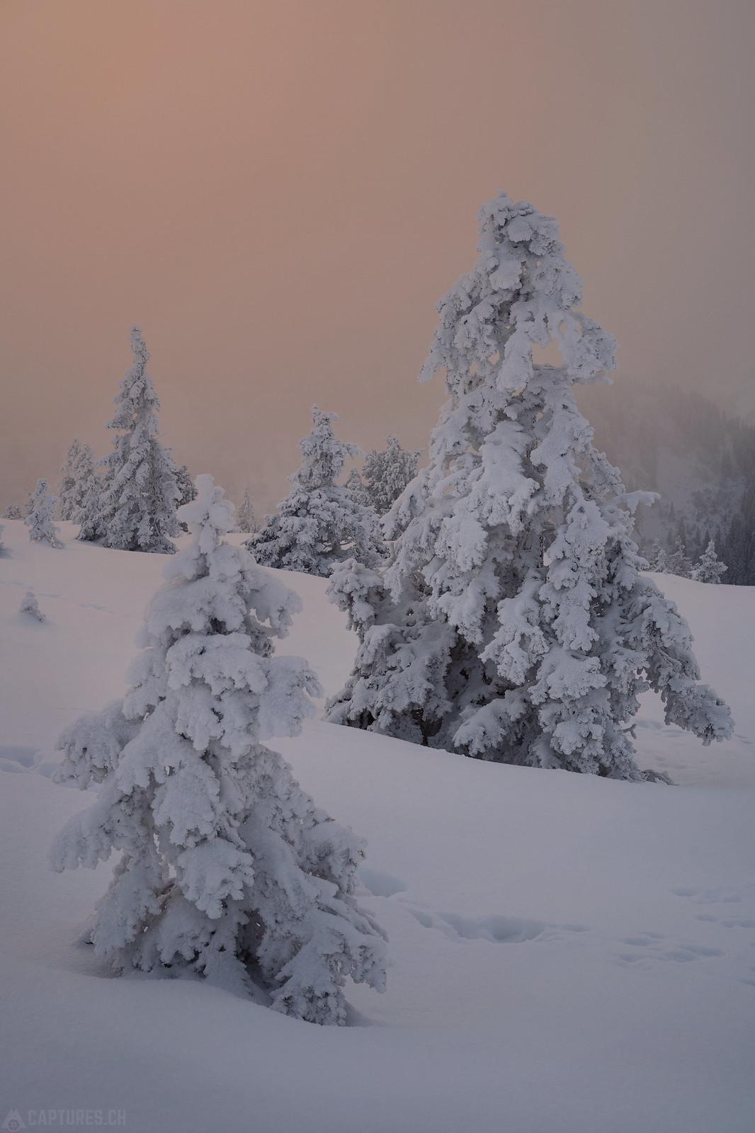 Colored fog - Zentralschweiz