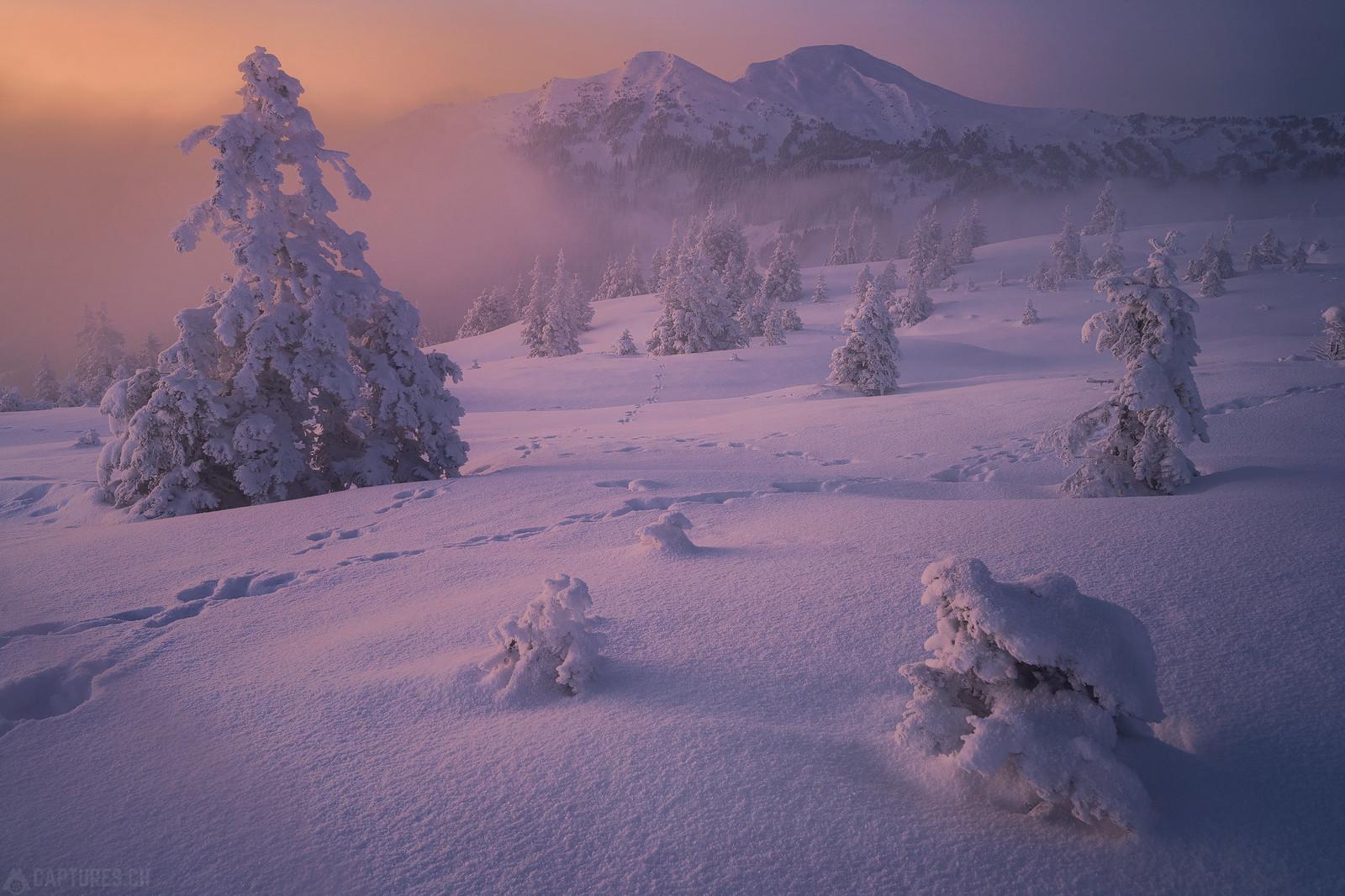 Frozen beauty - Zentralschweiz