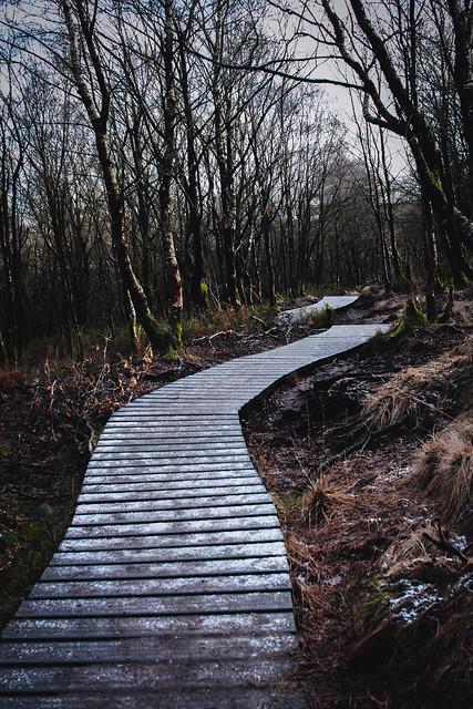 Staffordshires, Back Forest