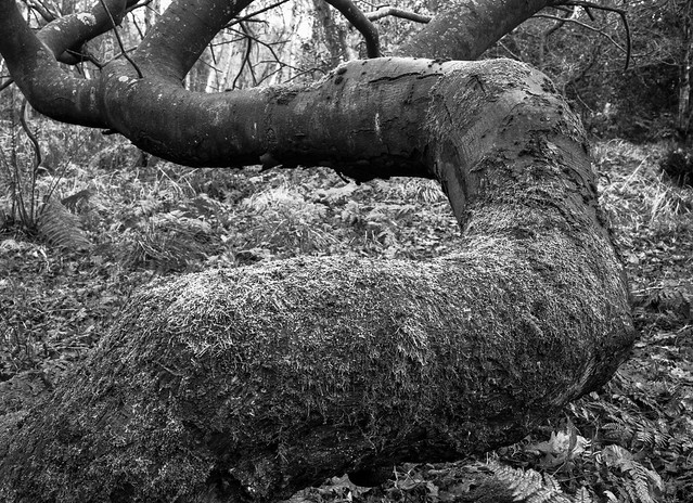 Hyons Wood, Mamiya 645E with 55mm, Acros II in HC110