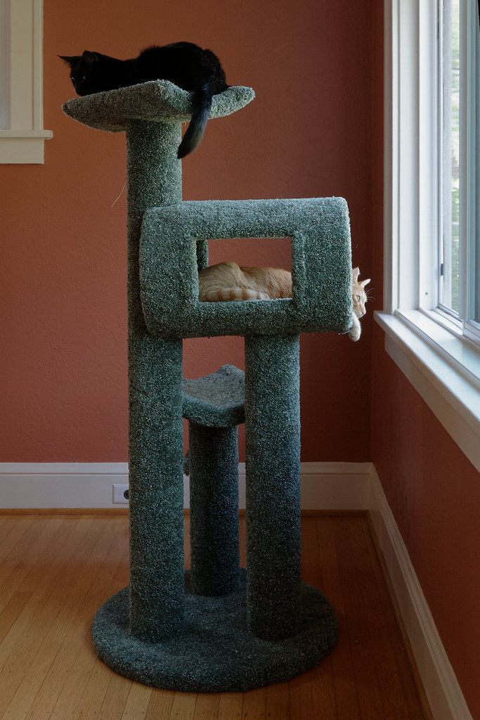 Our cats Emma and Sam in the cat tree in the dining room in July 2009. Original: _MG_6006.cr2