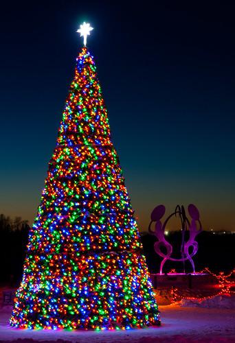Colourful Tree!