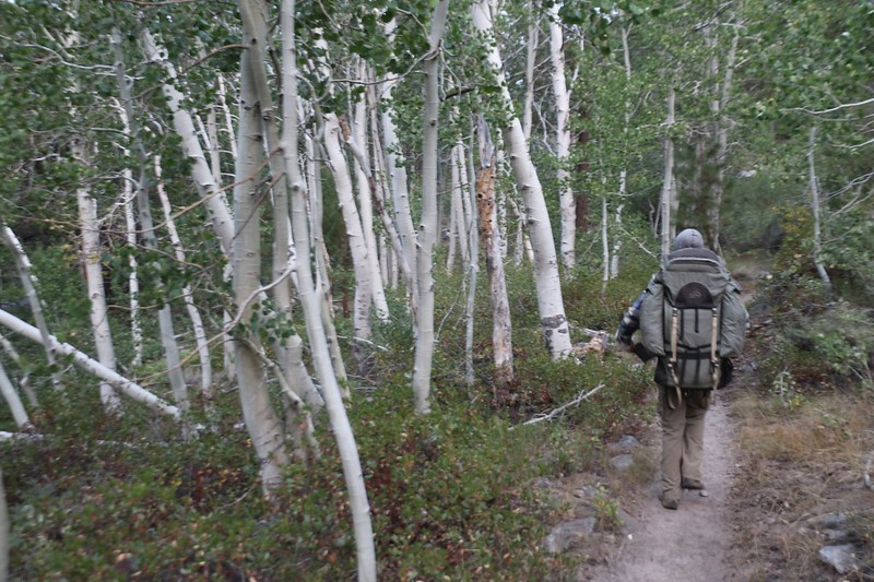 We passed through a grove of Aspens on the Pacific Crest Trail along Palisade Creek