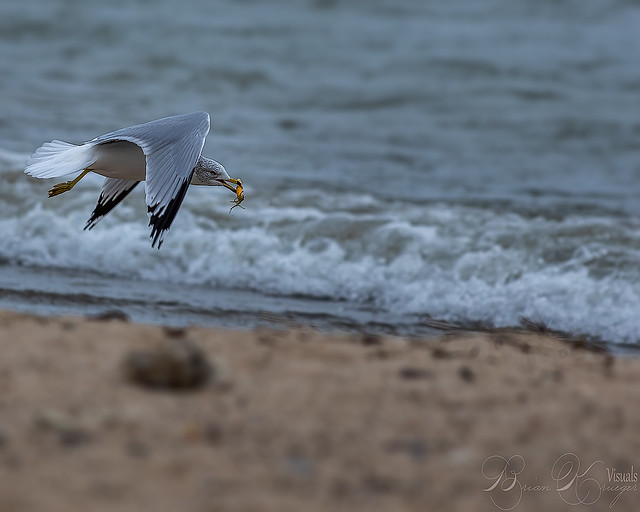 Fun day with the gulls