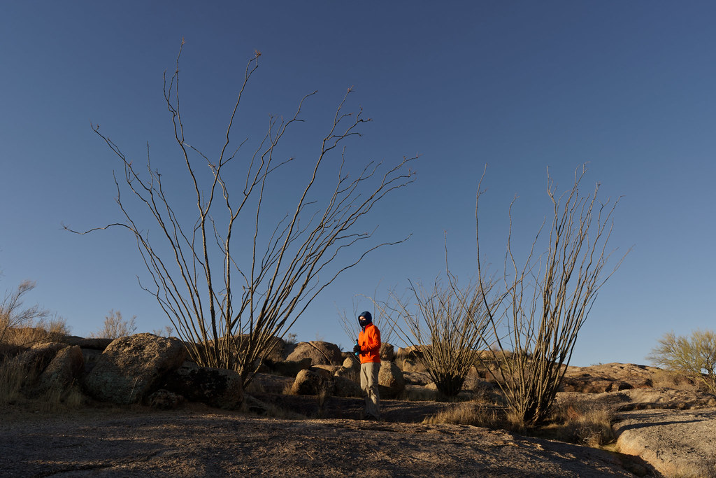 A self-portrait wearing a bright orange jacket while standing in front of a copse of ocotillos on an off-map trail in the Pima Dynamite section of McDowell Sonoran Preserve in Scottsdale, Arizona on December 26, 2020. Original: _CAM8233.arw