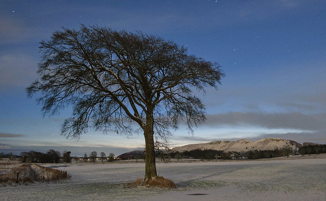 Moonlit Beech, Hatchbank Road
