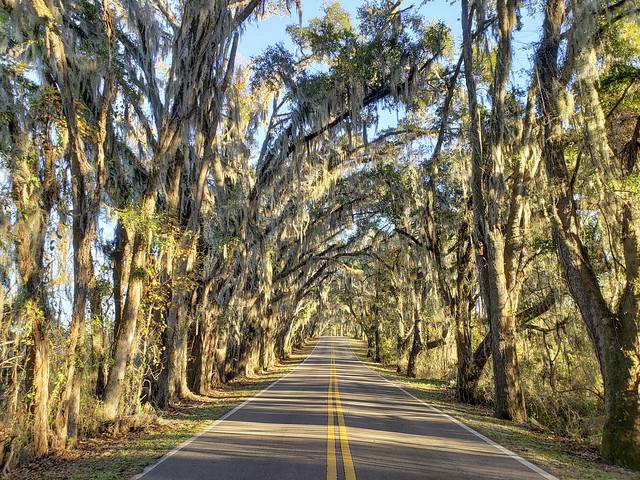 50773636271 abd9bbdcdd z Tallahassee, Florida   Miller Landing Road   December, 2020.
