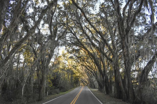 50773673186 8bea7e2cae z Tallahassee, Florida   Miller Landing Road.