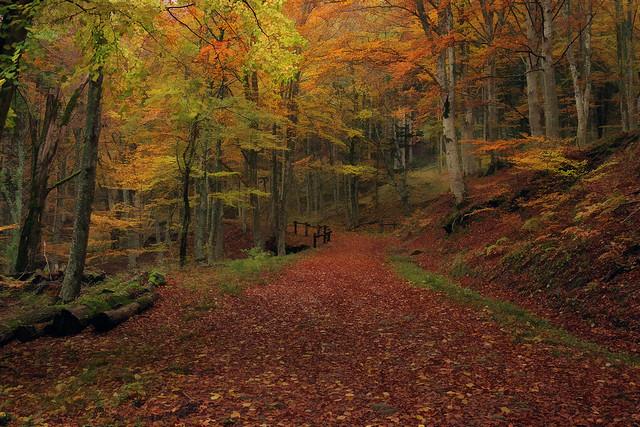 Autunno - Foreste Casentinesi