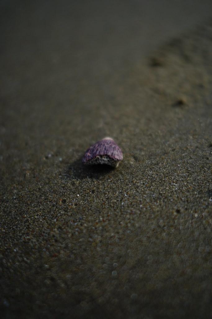 紫はちのす