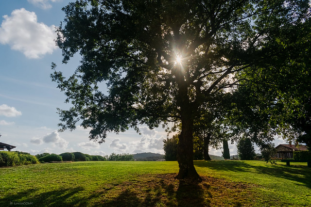 TE SUN AND TREE... COUNTRYSIDE