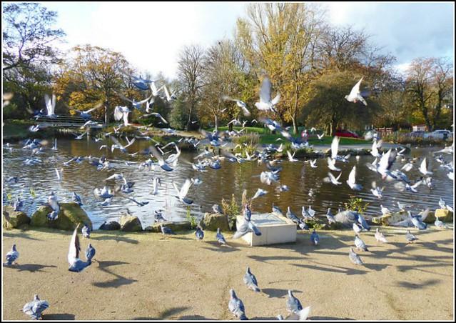Pigeons Galore !!..