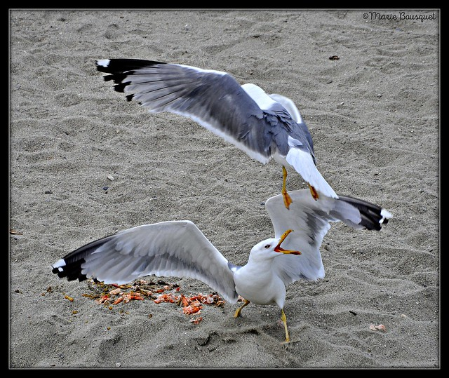 Dispute sur la plage pour des restes de paëlla