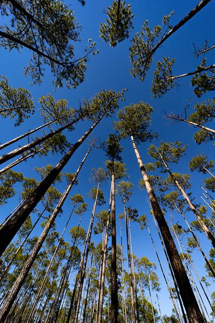 Skyward Pines