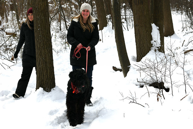 Taking the Giant Schnauzer for a Hike