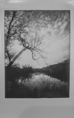 winterlandscape baretrees backlit lagoon nearsunset biltmoreestate asheville northcarolina lomoinstant instaxmini film instant instantfilm blackandwhite monochrome monochromatic instaxminimonochrome