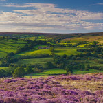 Summer in the North York Moors