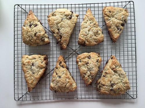 Sourdough chocolate scones