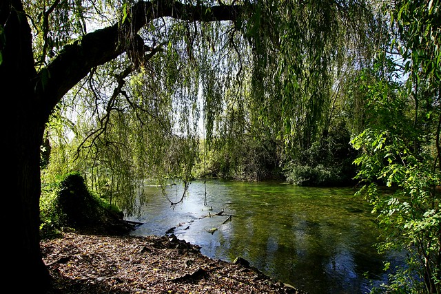the weeping willow - explored