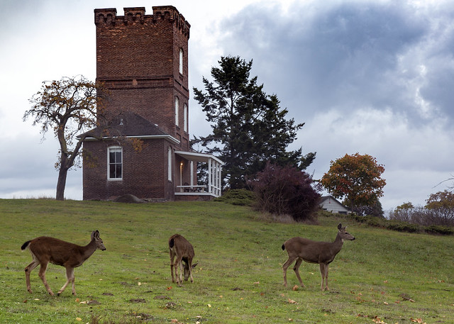 5IMG4201 Alexander's Castle with deer
