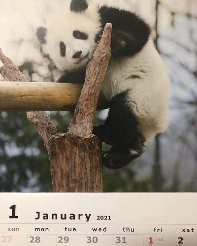 今日も明日もなんも予定無いので、早々と来年のカレンダーを掛けました。みなさん良いお年をお迎えください。