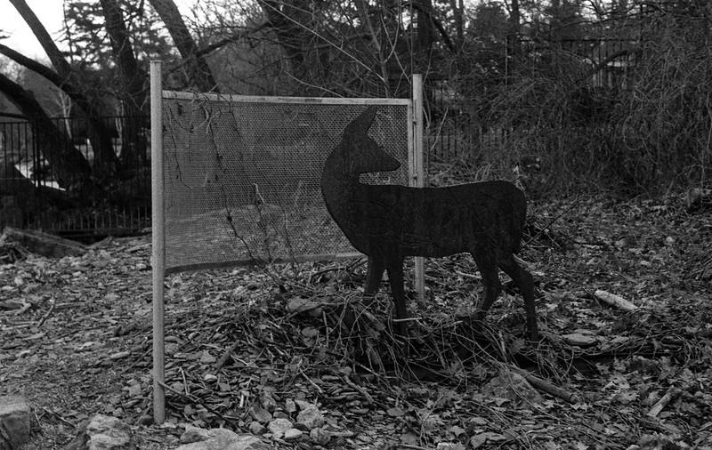 Deer Sculpture Installation