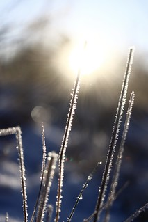 wintersun dec-20 | by sue-bell