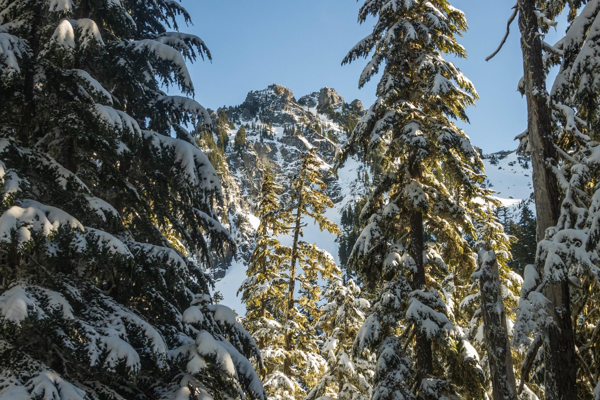 Nimbus Mountain through the trees