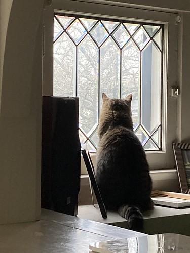 Mavis gazes out the window