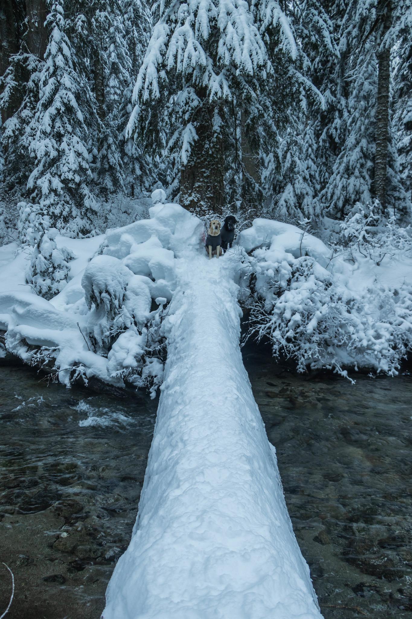 Surprise Creek log crossing