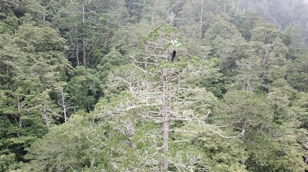 徐嘉君/上網就能幫忙 一起來尋找台灣的巨木吧!