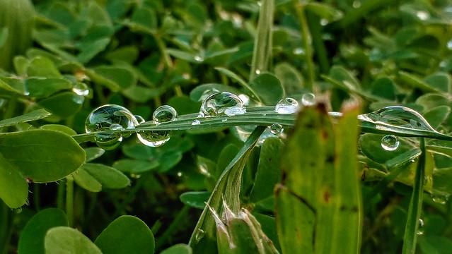 Morning dew - Orvalho