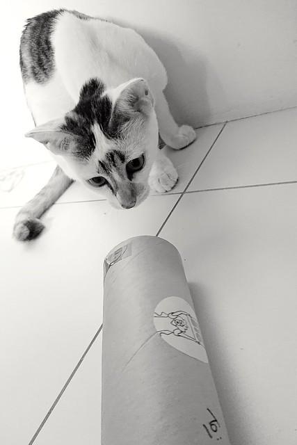 365/366: a curious-shaped parcel arrives