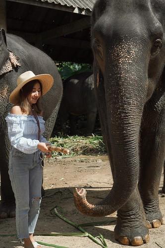 Asia Safari Khao Lak คาเฟ่ช้าง ลำแก่น ท้ายเหมือง