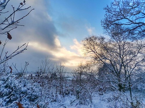 英国 snow winter sunset exploringtheuk traveltuesday travelbloggers travelphoto travelphotography travel natureperfection naturephoto naturelovers naturephotography nature landscapephotography landscape burntwood england gentleshawcommon