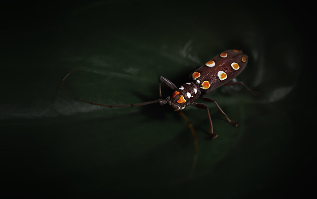 Tha Daily Insect
