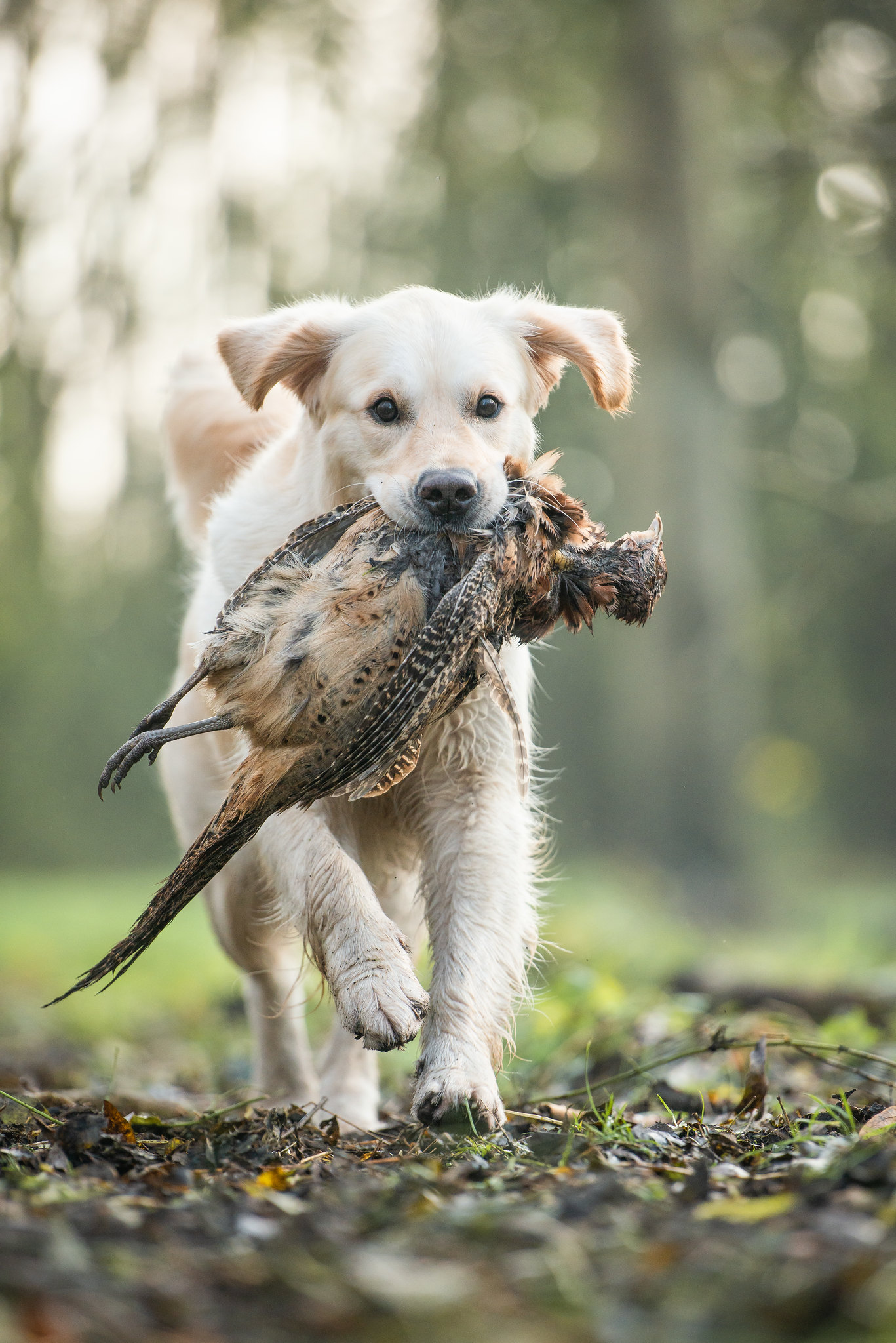 Cato met fazant