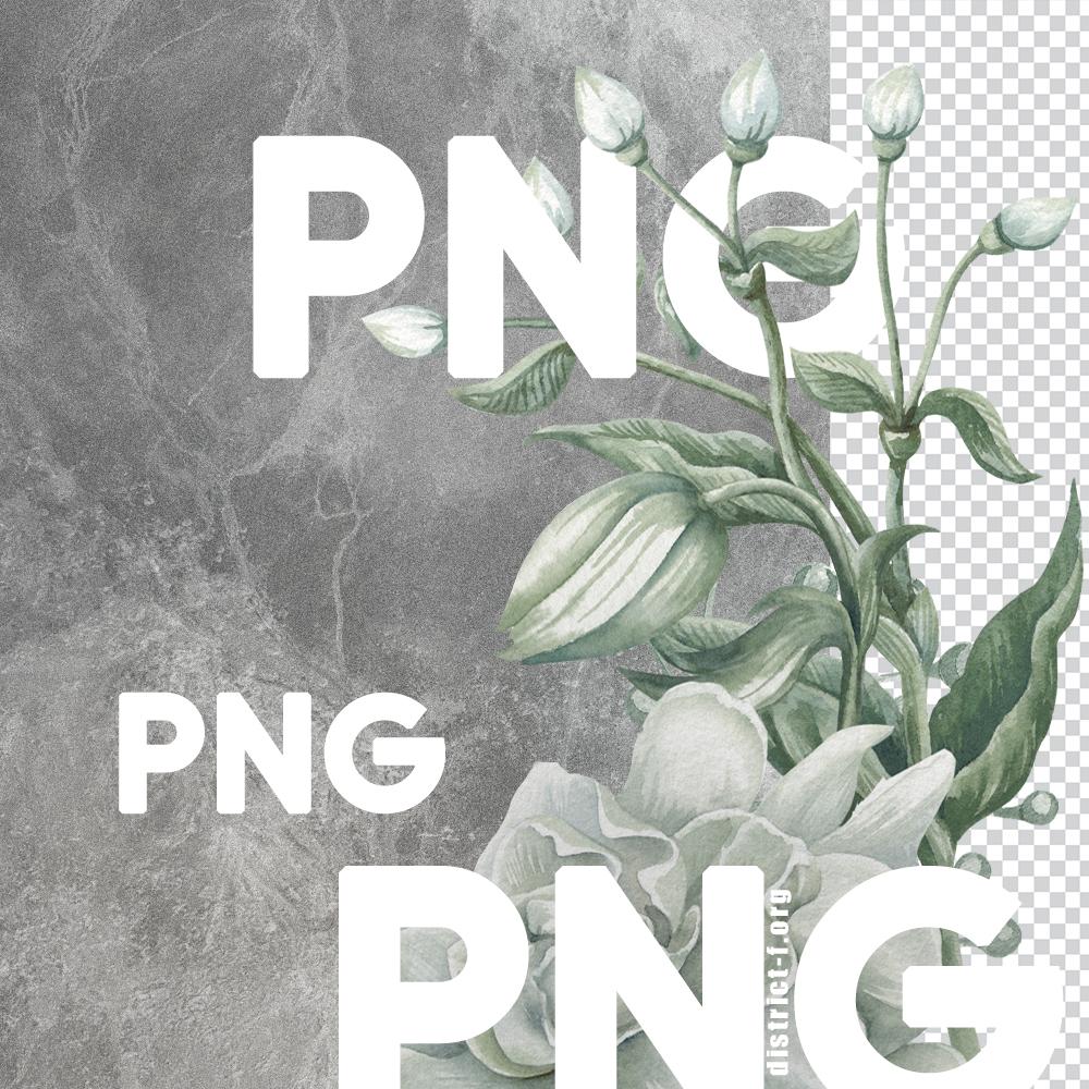 DF PNG