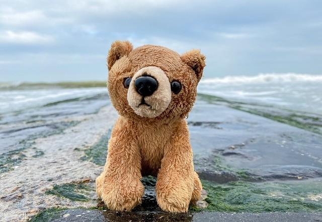 Teddy - 9246